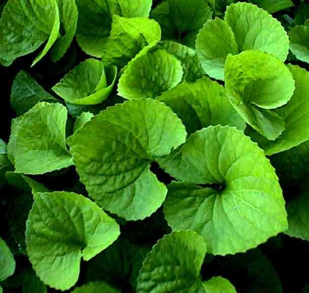 img-green